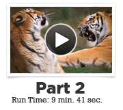 webinar vid img Sumida 02 Anatomy of a Fight with Dr. Stuart Sumida